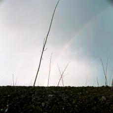 m50 rainbow