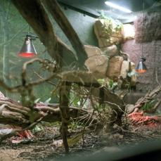 Lizard #1